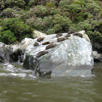 From Manapuri to Milford Sound