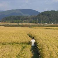 Gyeongju-si
