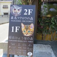 From Hiroshima to Miyajima