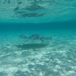 Grand Cayman Vacation