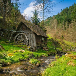 Holiday in the Black Forest